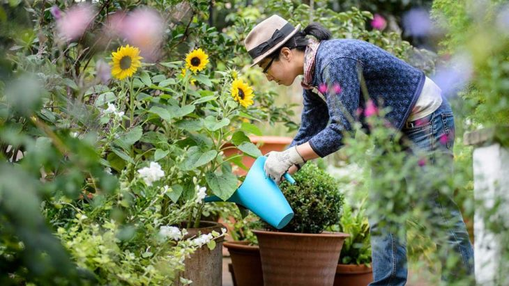 Five Places You Can Revitalize With Flowers