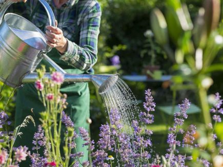 The Increasing Importance of Plant Breeding For a Better Living